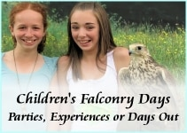 Childrens falconry experiences-s