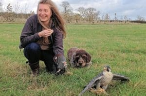 Private Half Day Falconry Adventure