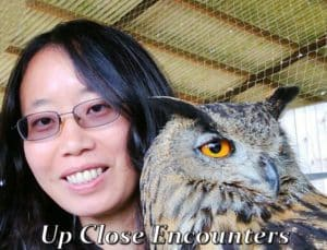 falconry experience up close with an eagle owl