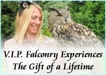 VIP falconry experience-s