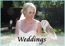 Wedding Falconry-s
