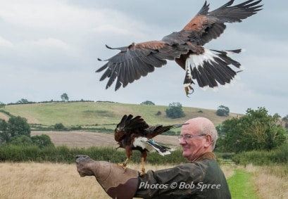 Falconry Adventure