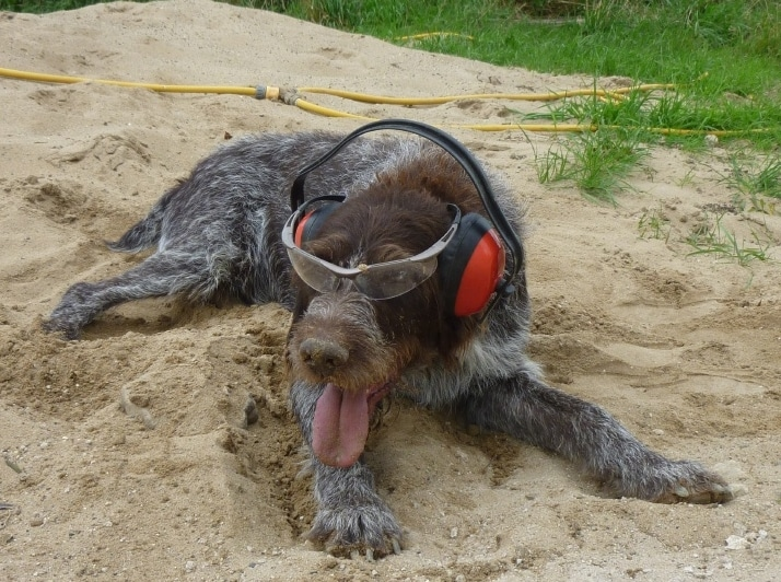 Boris dog the worker