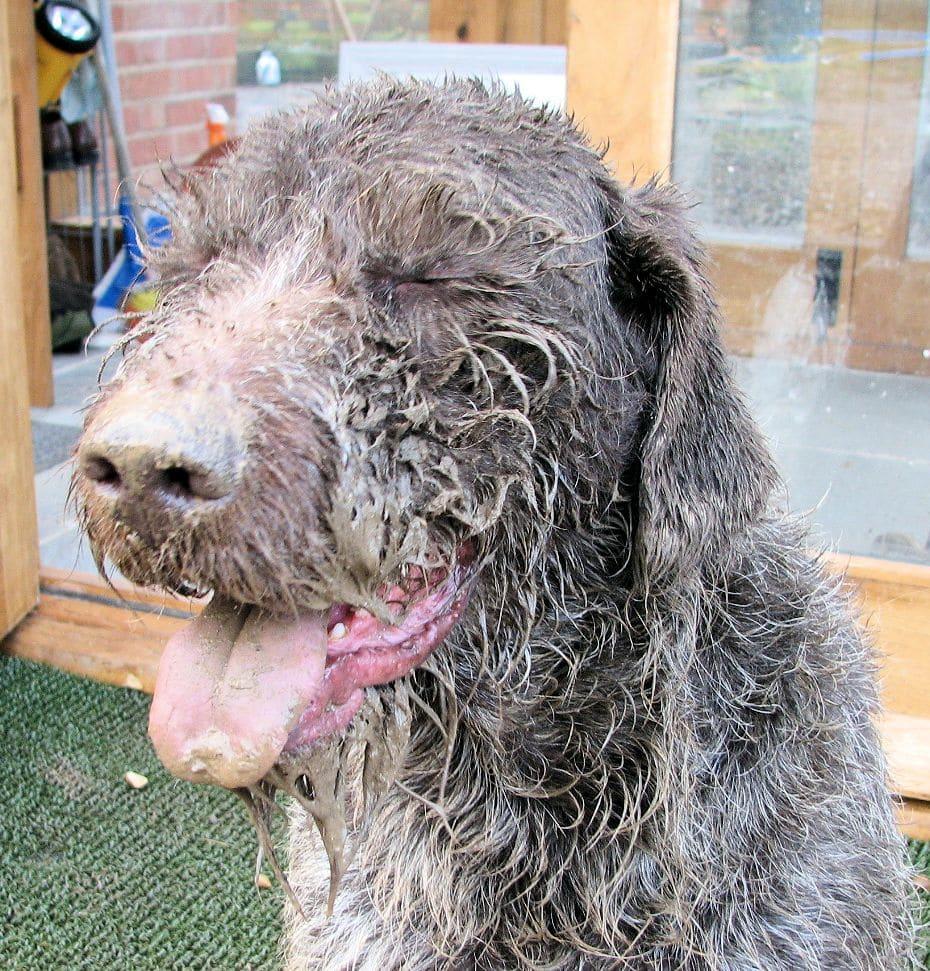 mucky boris dog