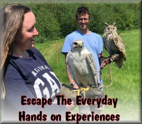 All our falconry experiences