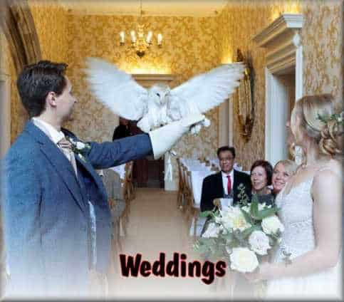 Weddings Ring Bearer or hands on display. Wow your guests.